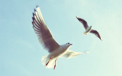 Lista Salpalinjan Hovin pihassa bongatuista lintulajeista